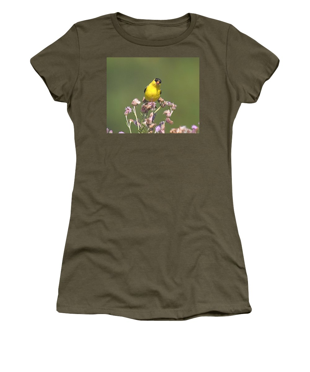 Bird Women's T-Shirt (Athletic Fit) featuring the photograph Mr Gold Finch by Robert Pearson
