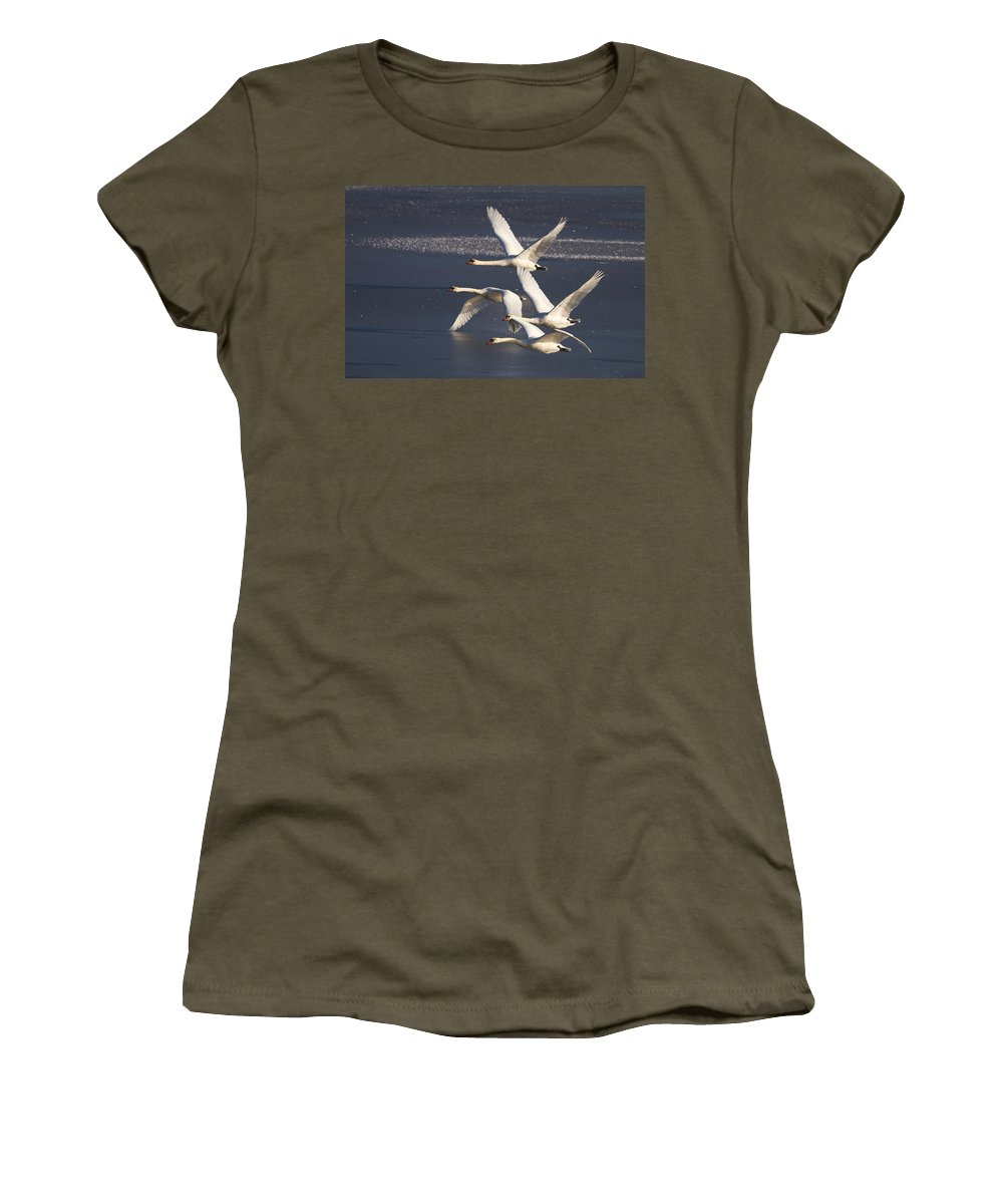 Swans Women's T-Shirt featuring the photograph Mute Swans In Flight by Bob Kemp