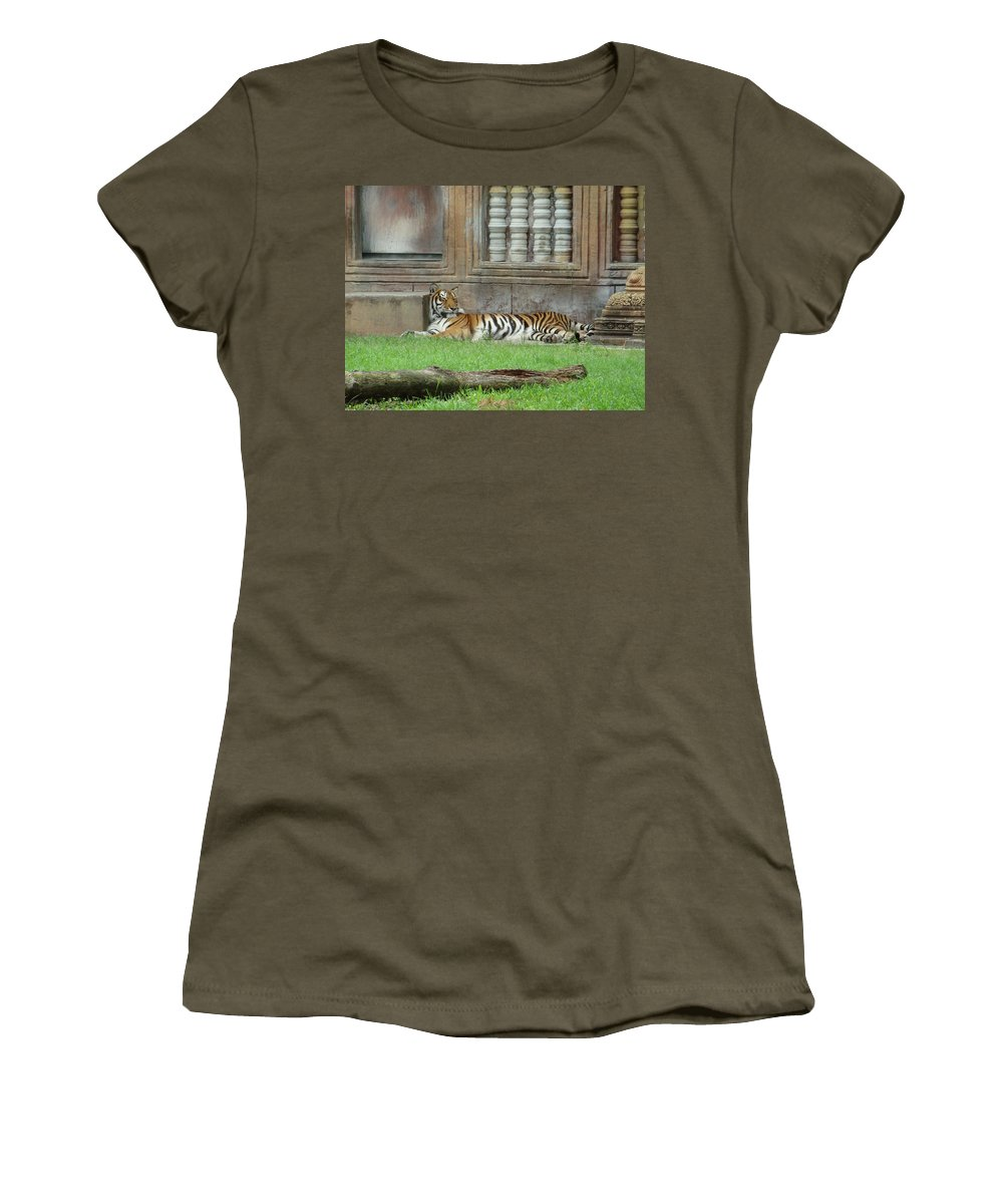 Tiger Women's T-Shirt featuring the photograph Nap Time by Cathi Abbiss Crane
