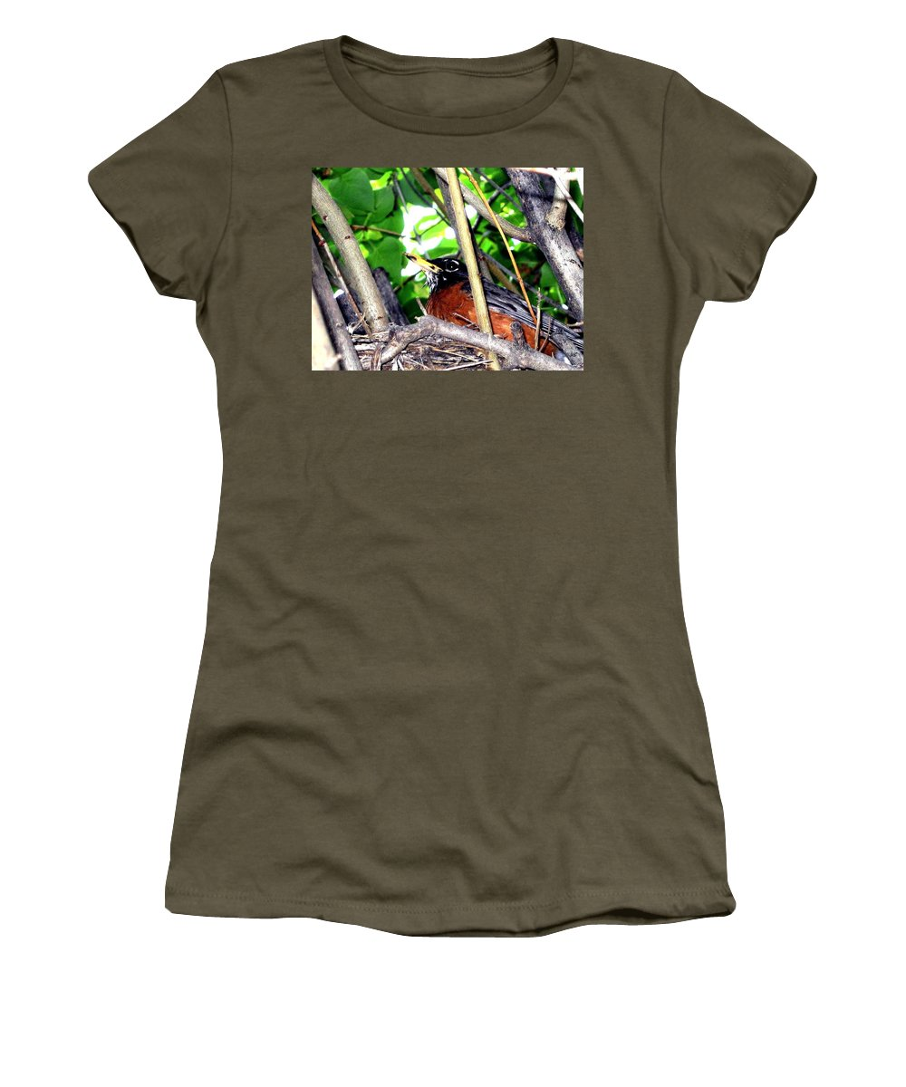 Robin Women's T-Shirt featuring the photograph Nesting Robin by Will Borden