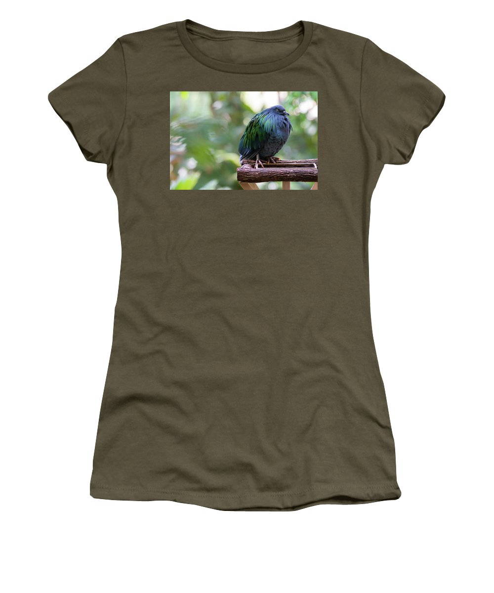 Nicobar Pigeon Women's T-Shirt (Athletic Fit) featuring the photograph Nicobar Pigeon by Andrew Lelea