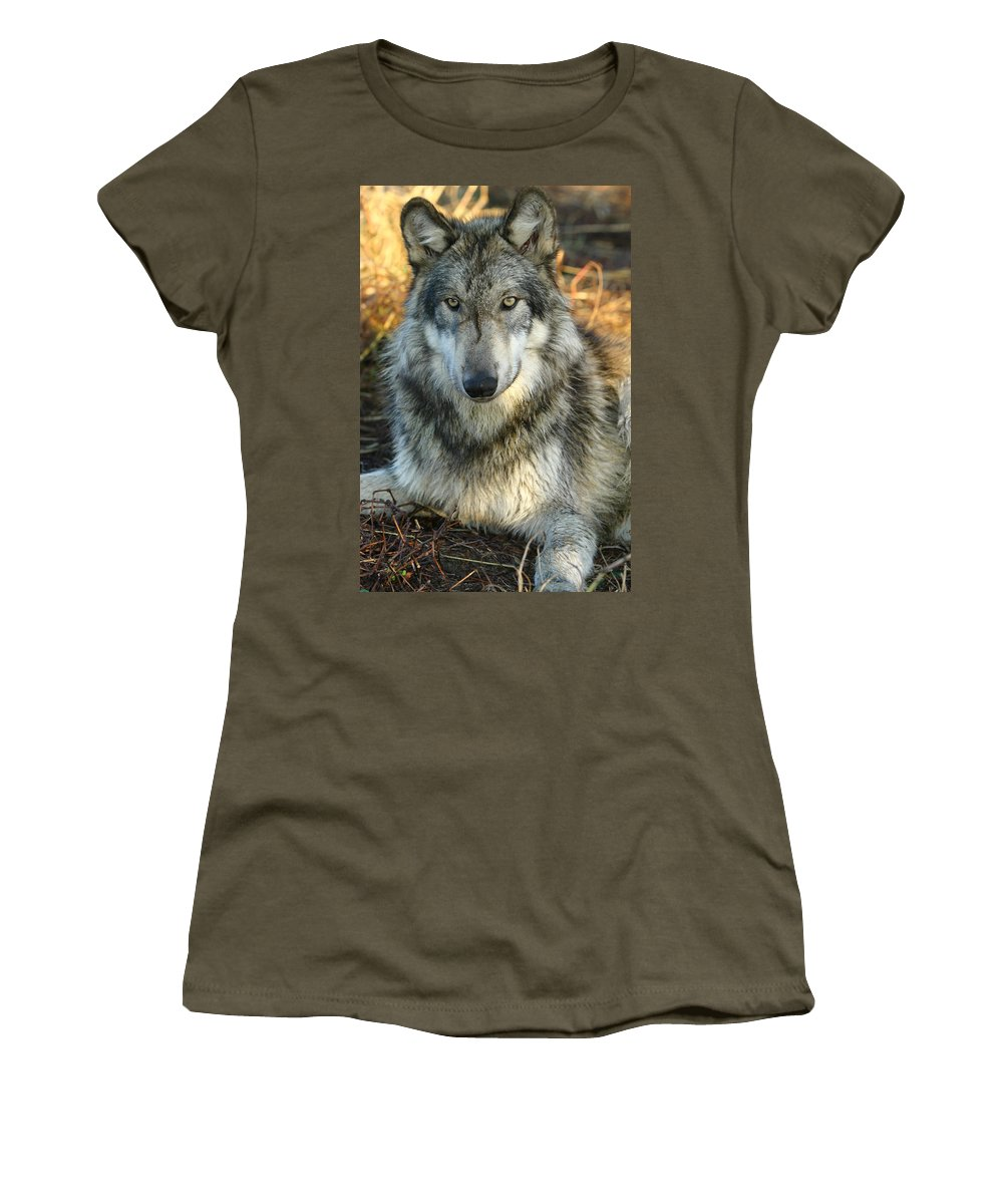 Wolf Lupine Canis Lupus Animal Wildlife Photography Photograph Women's T-Shirt featuring the photograph Noble Lupine by Shari Jardina