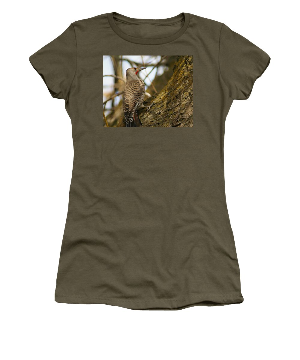 Birds Women's T-Shirt featuring the photograph Northern Flicker Woodpecker 1 by Ben Upham III