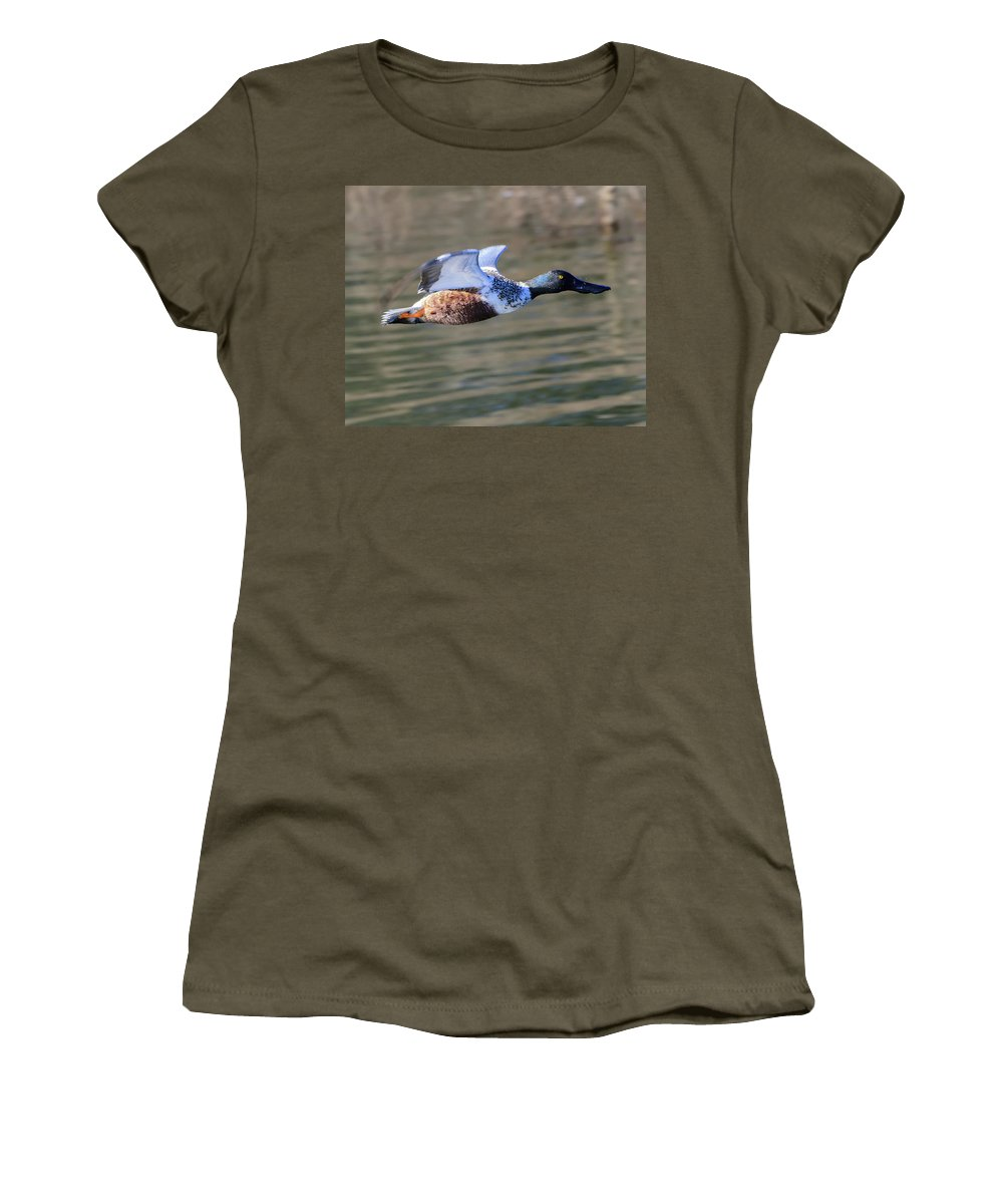Anas Clypeata Women's T-Shirt featuring the photograph Northern Shoveler On The Wing by Steve Samples
