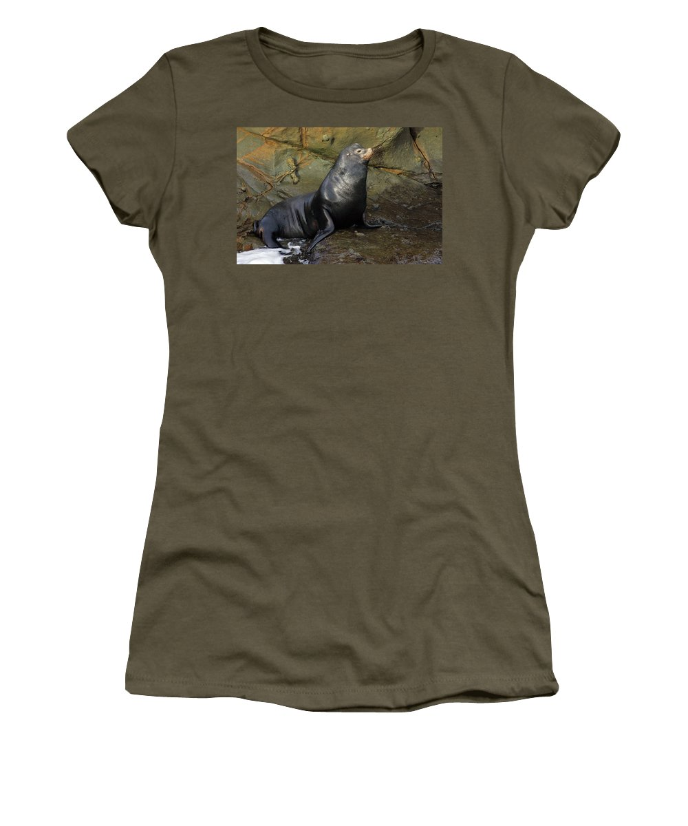 Sea Lion Women's T-Shirt featuring the photograph Posing Sea Lion by Randall Ingalls