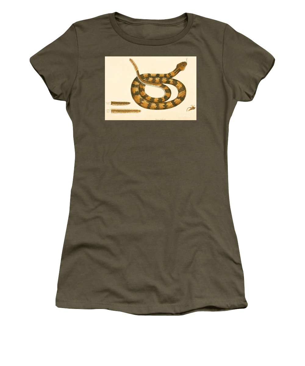 Viper Caudison Snake Women's T-Shirt featuring the drawing Rattlesnake by Mark Catesby