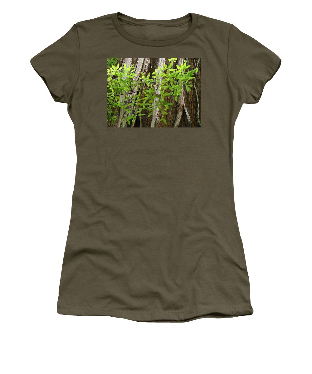 Redwood Women's T-Shirt featuring the photograph Redwood Tree Art Prints Baslee Troutman by Baslee Troutman