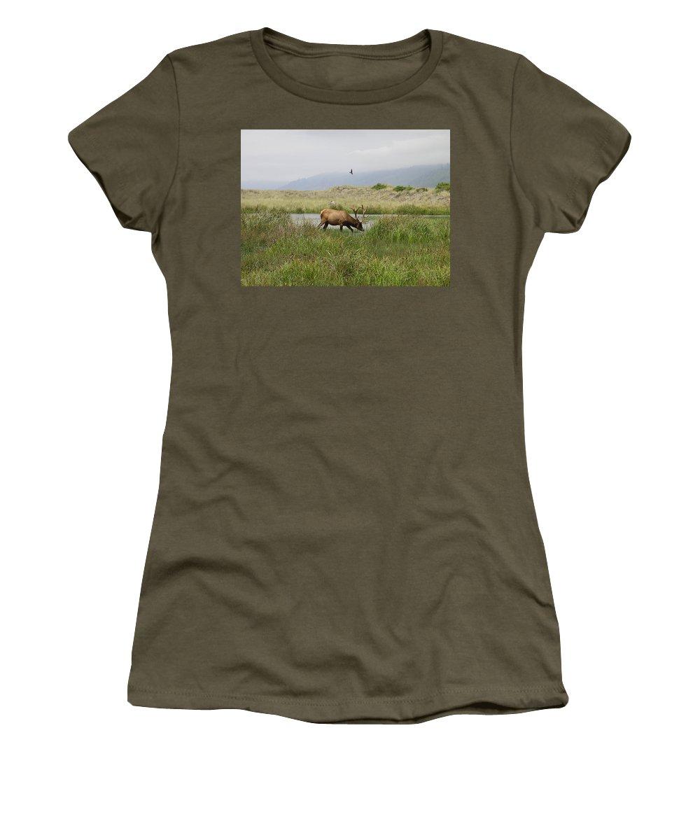 California Women's T-Shirt featuring the photograph Roosevelt Elk 1 by Rich Bodane