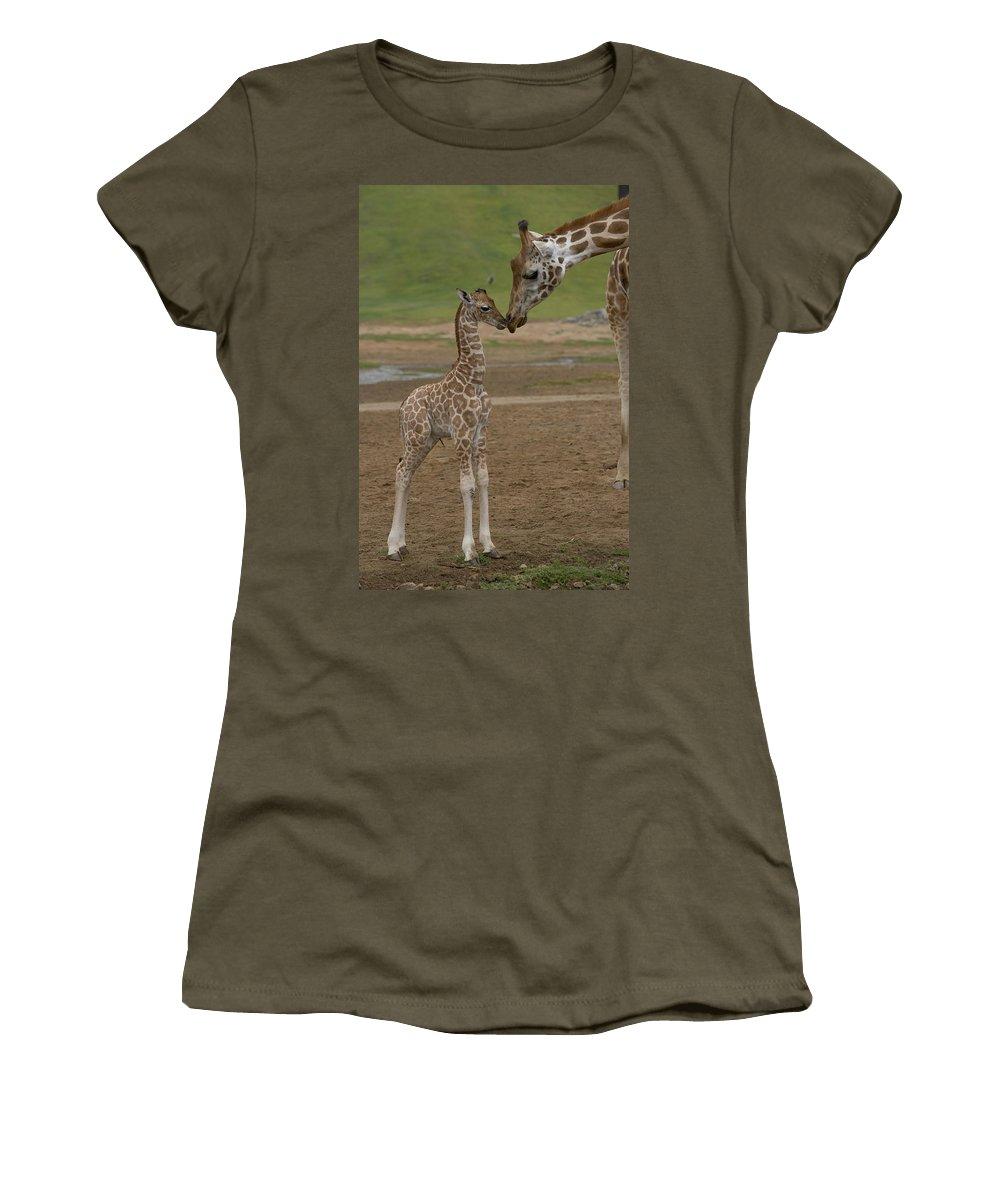 Mp Women's T-Shirt featuring the photograph Rothschild Giraffe Giraffa by San Diego Zoo