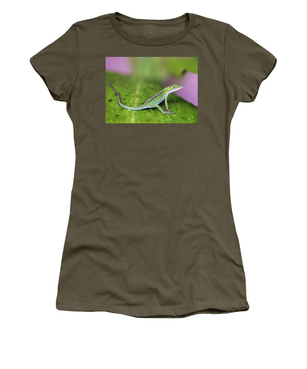 Lizard Women's T-Shirt (Athletic Fit) featuring the photograph Sitting Pretty by Marilyn Hunt
