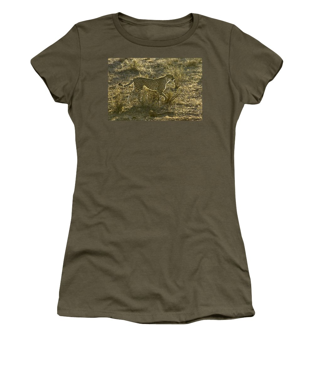 Africa Women's T-Shirt featuring the photograph Sleek And Spotted by Michele Burgess