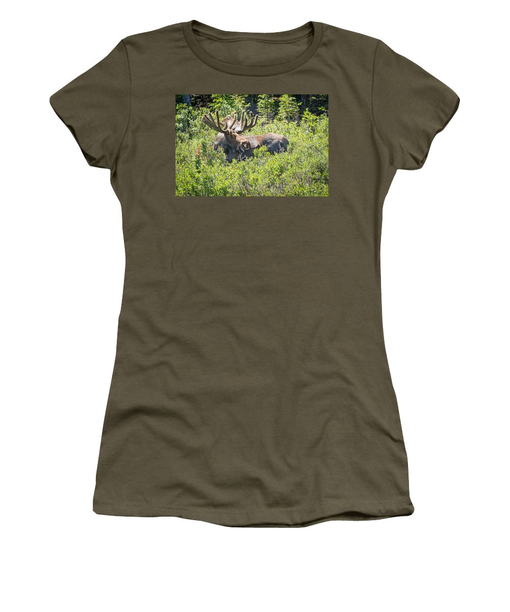 Moose Women's T-Shirt featuring the photograph Smiling Bull Moose by James BO Insogna