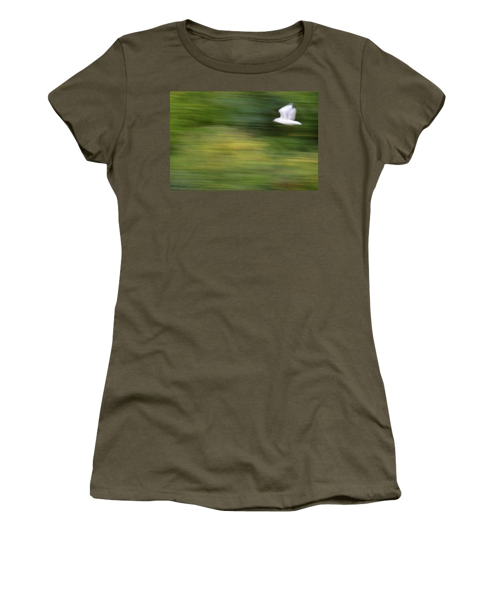 Seagull Women's T-Shirt featuring the photograph Speed In Flight by Karol Livote