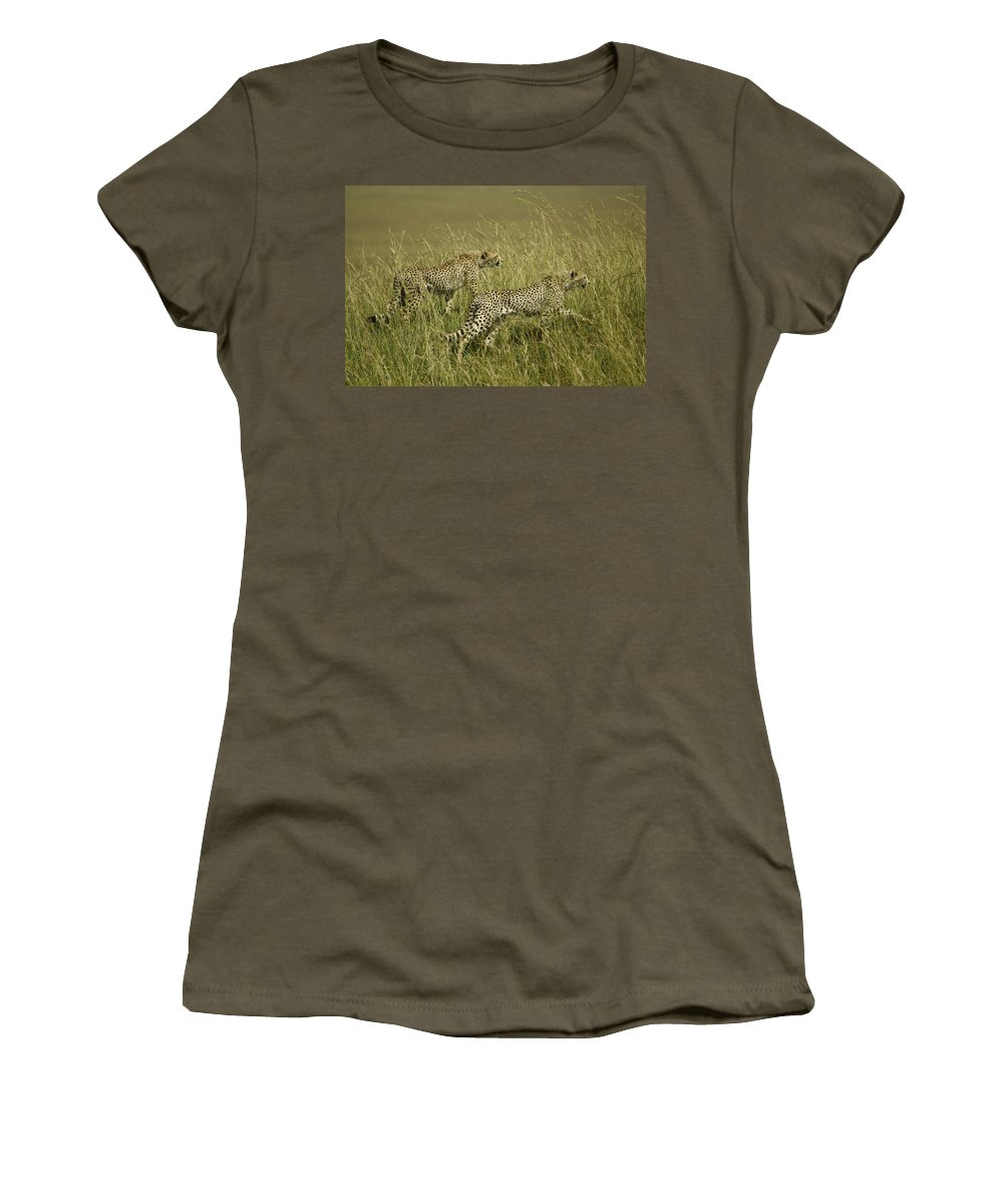 Africa Women's T-Shirt featuring the photograph Stalking Cheetahs by Michele Burgess