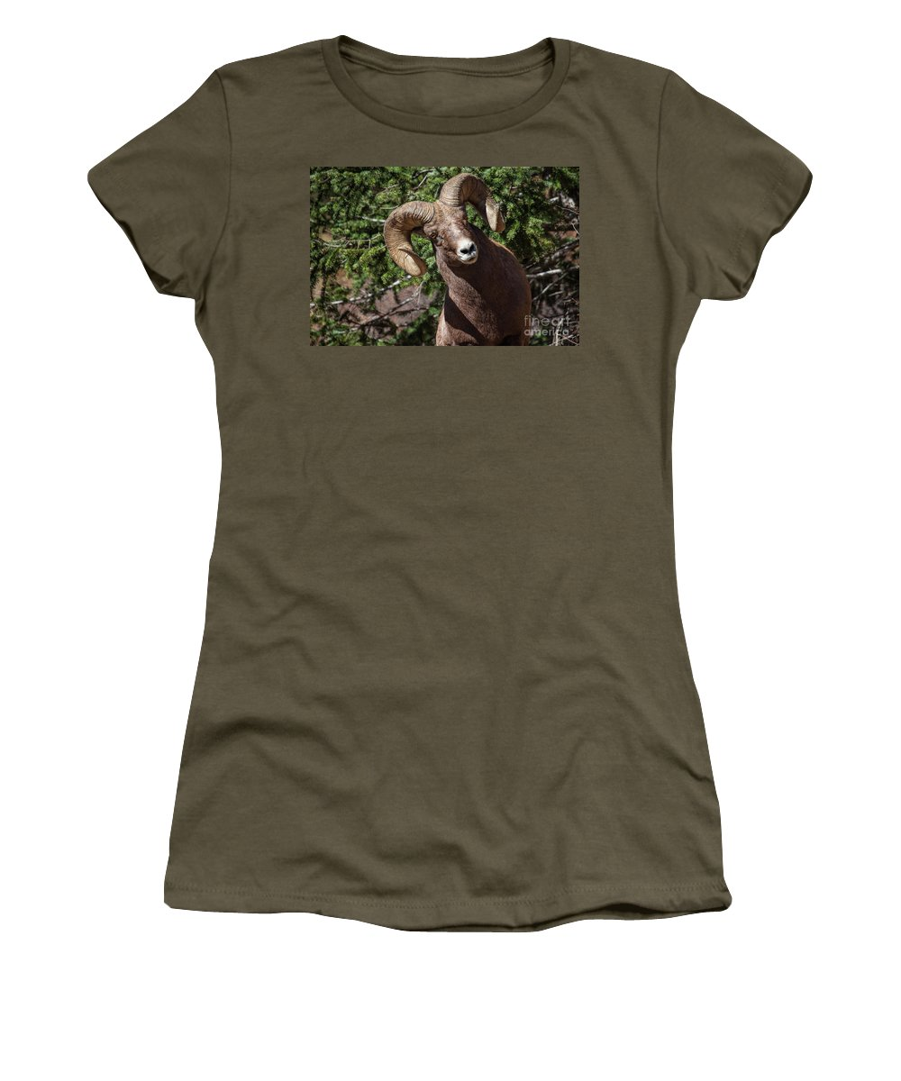 Bighorn Sheep Women's T-Shirt featuring the photograph The Investigation by Jim Garrison