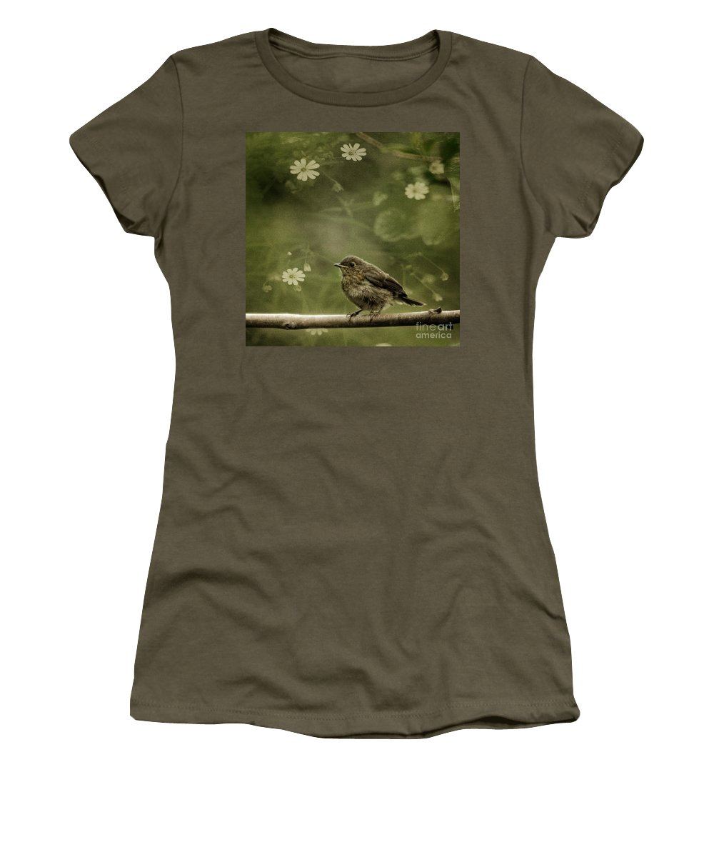 Robin Women's T-Shirt (Athletic Fit) featuring the photograph The Little Robin by Angel Tarantella
