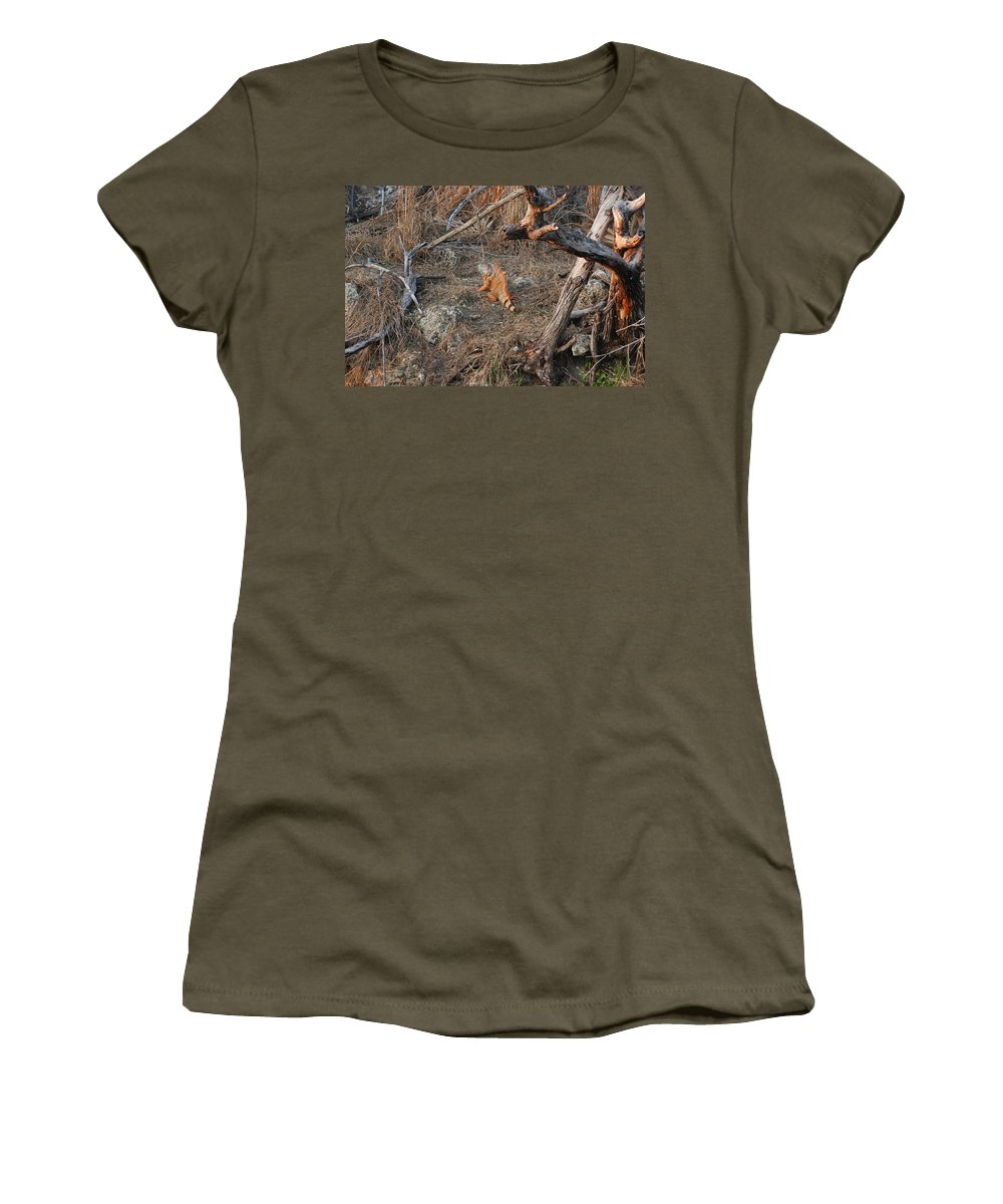 Branches Women's T-Shirt (Athletic Fit) featuring the photograph The Orange Iguana by Rob Hans