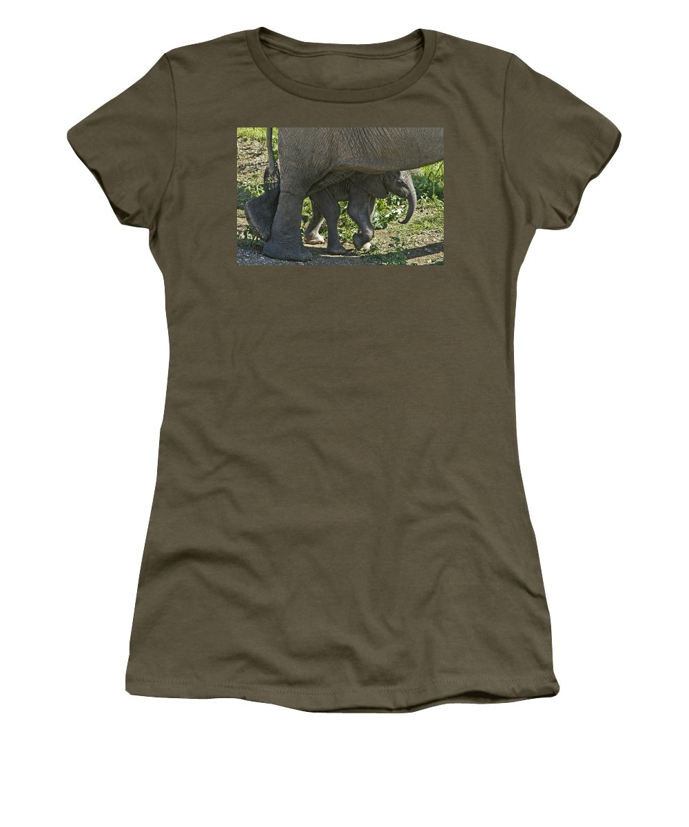 Africa Women's T-Shirt featuring the photograph Tiny Newborn by Michele Burgess