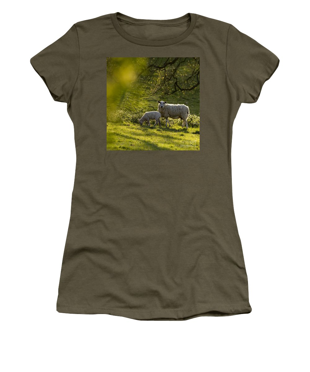 Lamb Women's T-Shirt (Athletic Fit) featuring the photograph Under The Setting Sun by Angel Ciesniarska