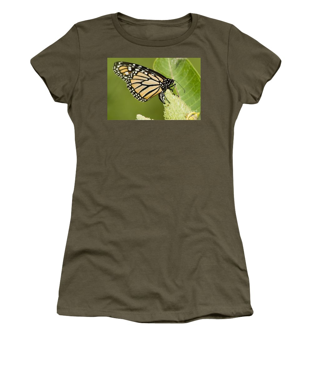 Viceroy Women's T-Shirt featuring the photograph Viceroy Butterfly by Ralf Broskvar