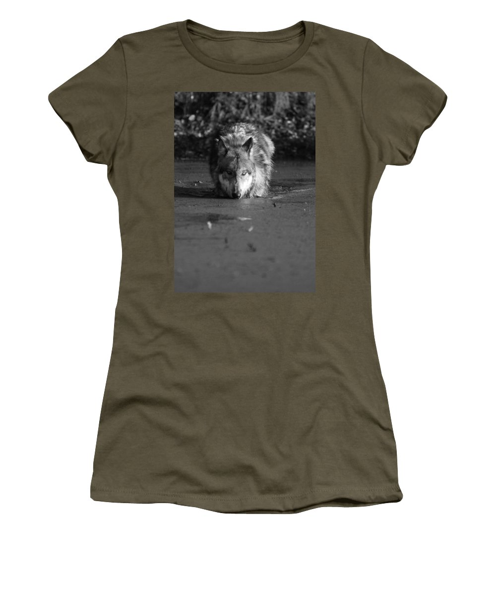 Wolf Wolves Lupine Canis Lupis Animal Wildlife Photograph Photography Women's T-Shirt featuring the photograph Water Wolf I by Shari Jardina