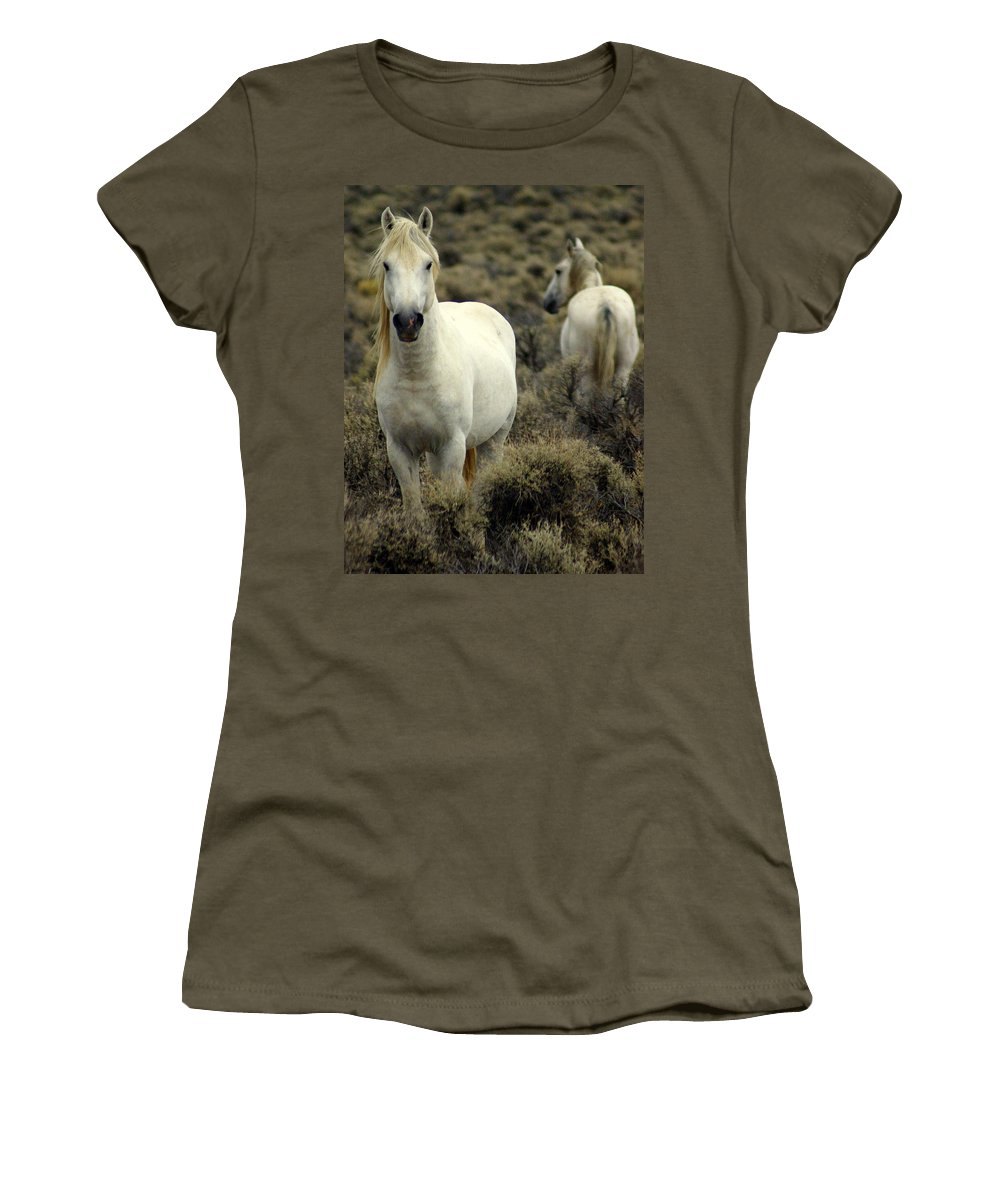 Wild Horses Women's T-Shirt (Athletic Fit) featuring the photograph Wild Stallion by Marty Koch