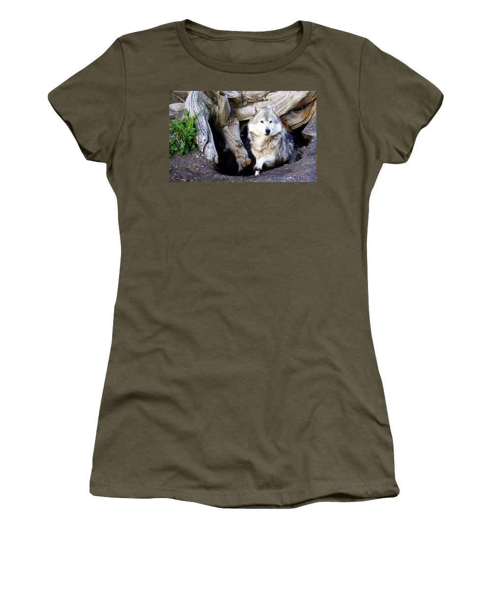 Wolf Women's T-Shirt featuring the photograph Wolf Den 1 by Marty Koch