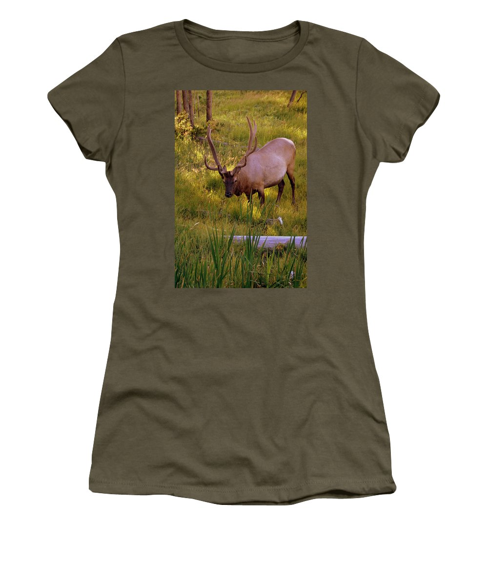 Elk Women's T-Shirt featuring the photograph Yellowstone Bull by Marty Koch