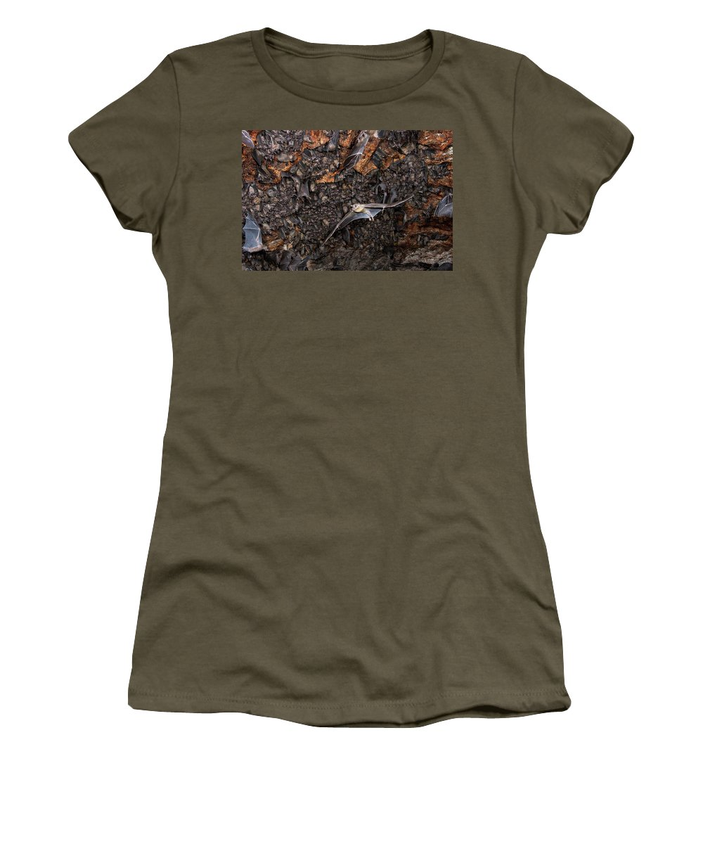 African Fruit Bat Women's T-Shirt featuring the photograph Colony Of Egyptian Fruit Bats 2 by Ivan Kuzmin