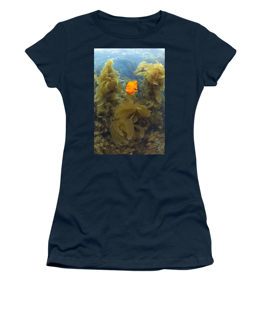 531466 Women's T-Shirt featuring the photograph Garibaldi In Giant Kelp Forest Catalina by Richard Herrmann