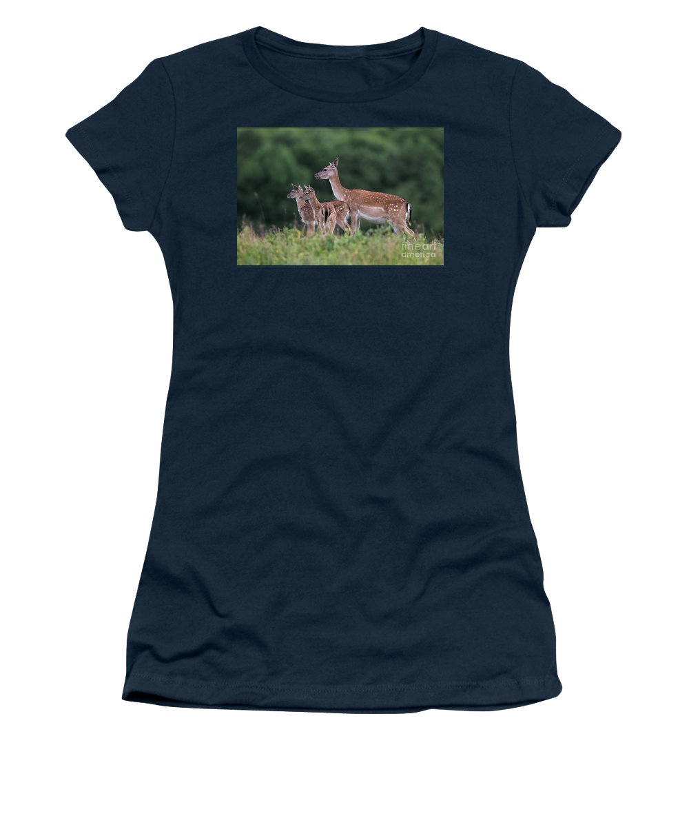 Fallow Deer Women's T-Shirt featuring the photograph 110613p158 by Arterra Picture Library