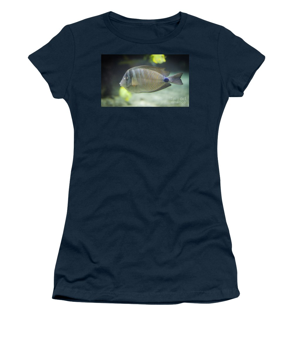 Desjardini Women's T-Shirt featuring the photograph Striped Tropical Fish Desjardini Tang by Shaun Wilkinson