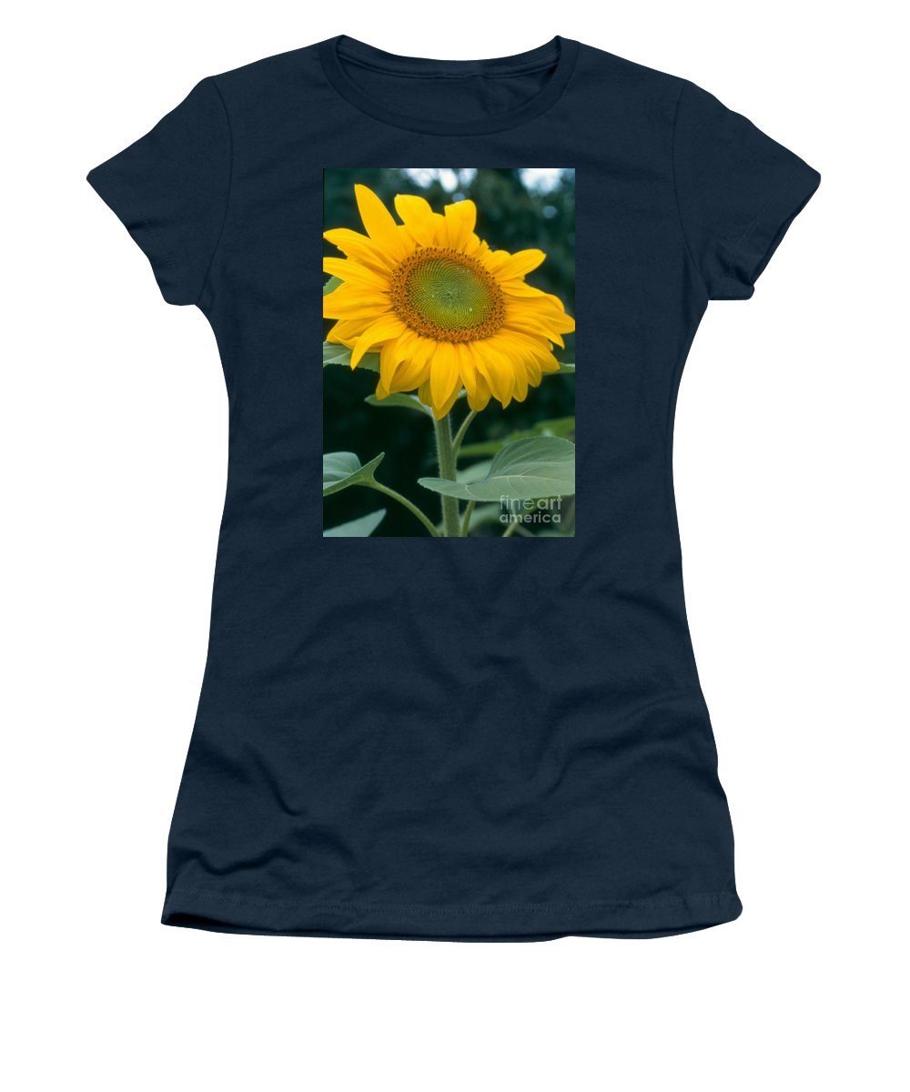 Flower Women's T-Shirt (Athletic Fit) featuring the photograph Sunflower In Seattle by Heather Kirk