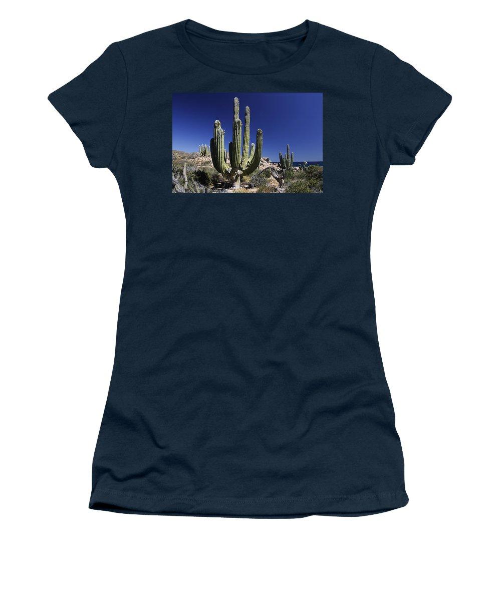 Mp Women's T-Shirt featuring the photograph Cardon Pachycereus Pringlei Cacti by Hiroya Minakuchi
