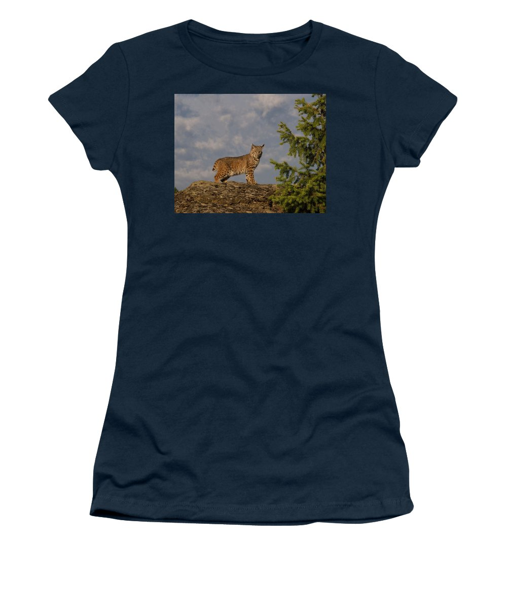 Bobcat Women's T-Shirt featuring the photograph Curious bobcat by Roy Nierdieck