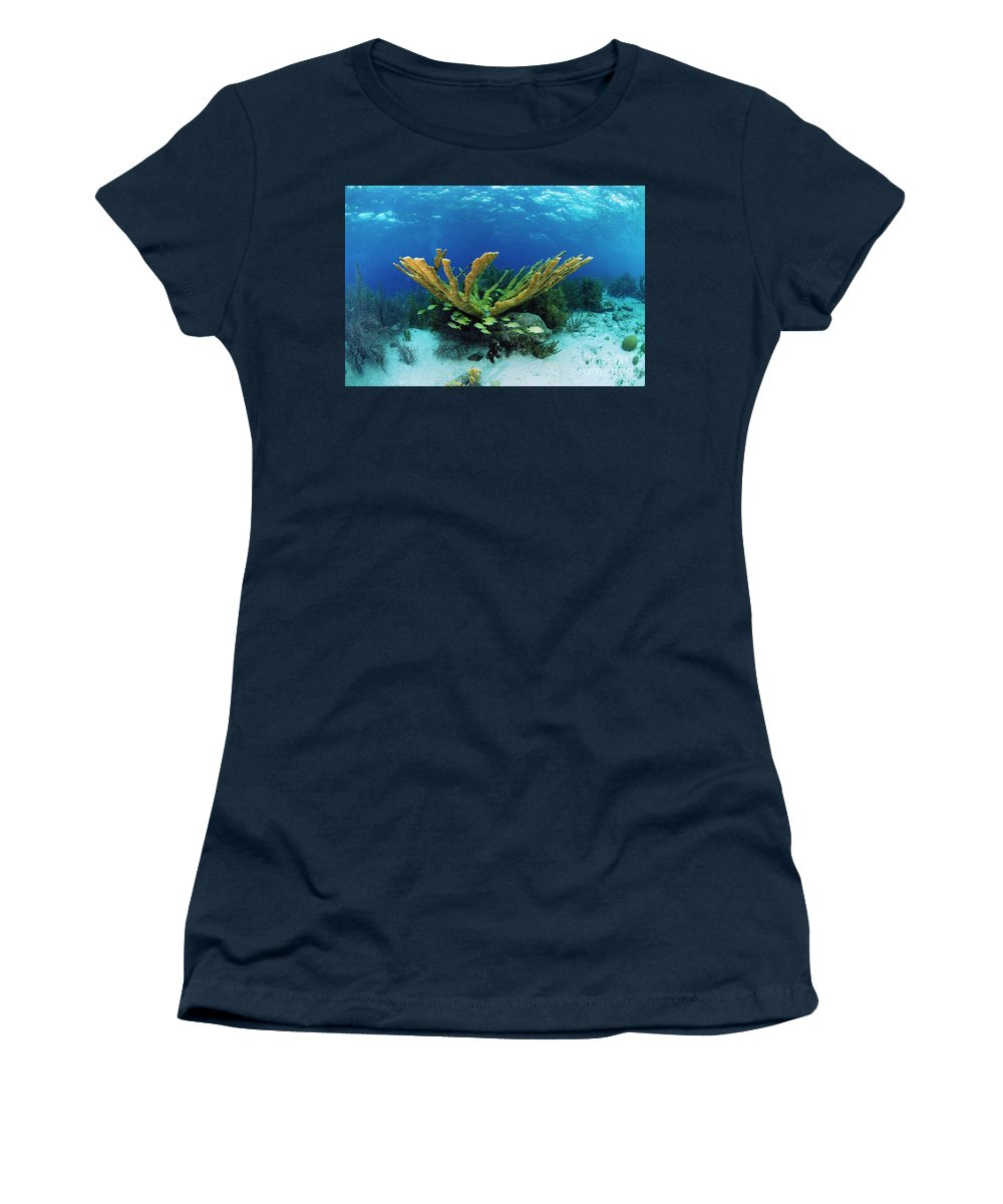 70007084 Women's T-Shirt featuring the photograph Elkhorn Coral by Hans Leijnse