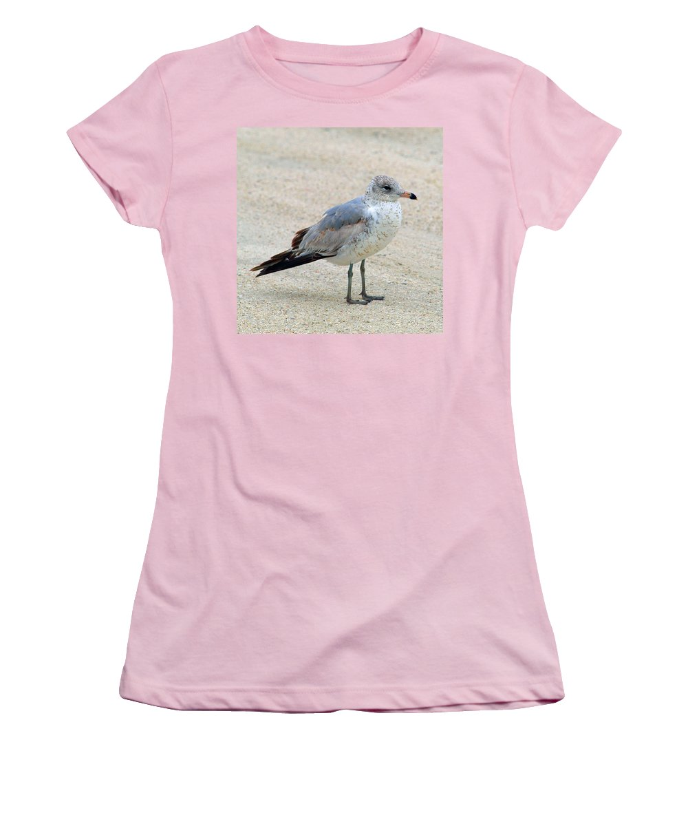 Laughing; Gull; Seagull; Bird; Waterfowl; Seashore; Sebastian; Inlet; Flying; Florida; Larus; Atrici Women's T-Shirt (Athletic Fit) featuring the photograph Laughing Gull by Allan Hughes