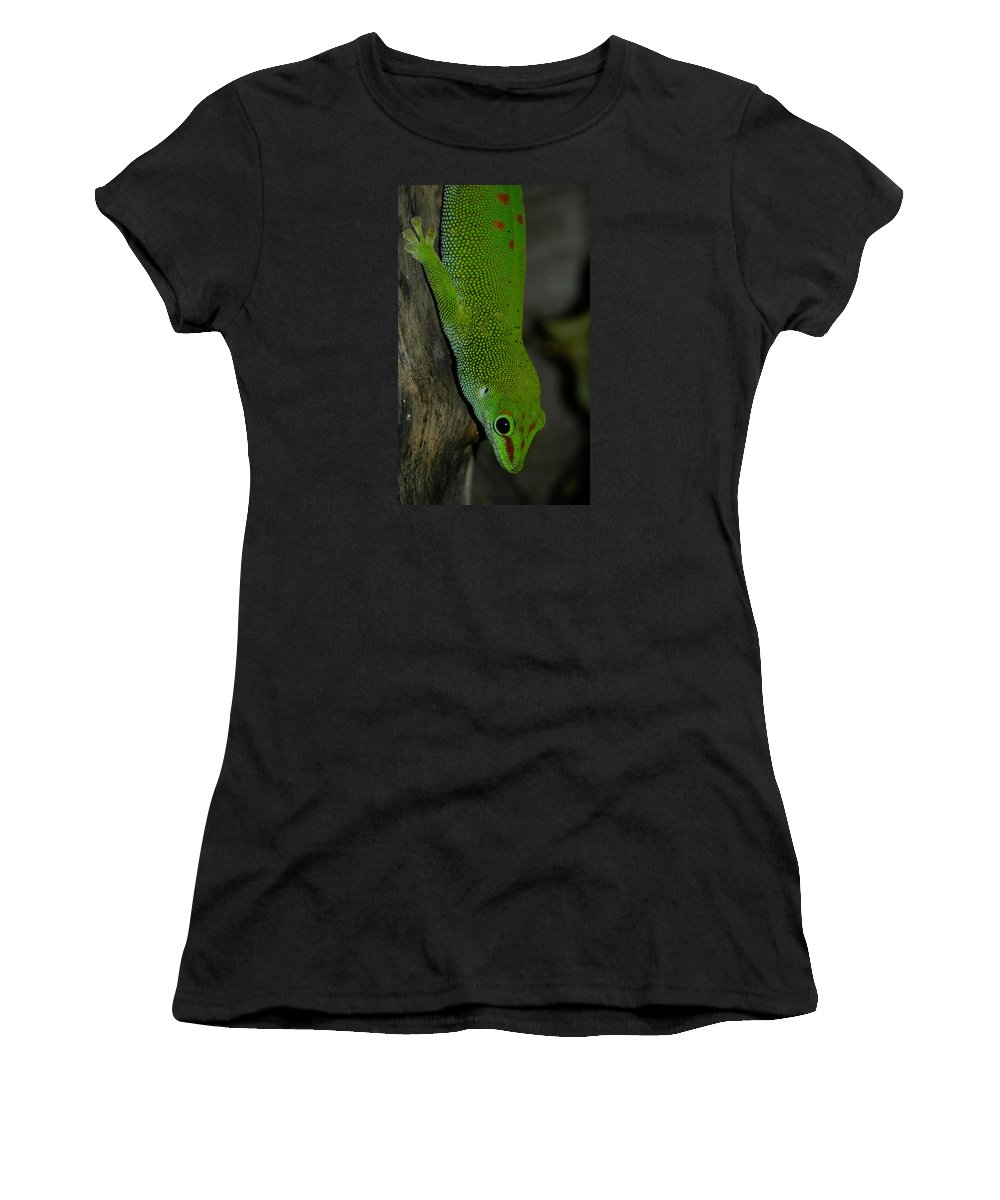 Animal Women's T-Shirt (Athletic Fit) featuring the photograph Climbing Giant Day Gecko by Jill Mitchell