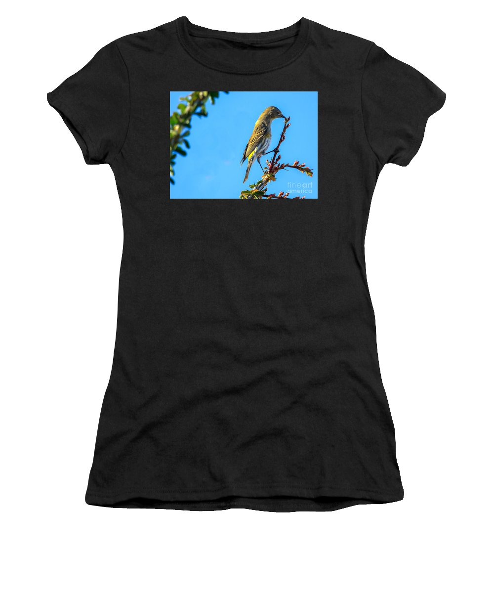 Small Women's T-Shirt (Athletic Fit) featuring the photograph Yellow-rumped Warbler by Robert Bales