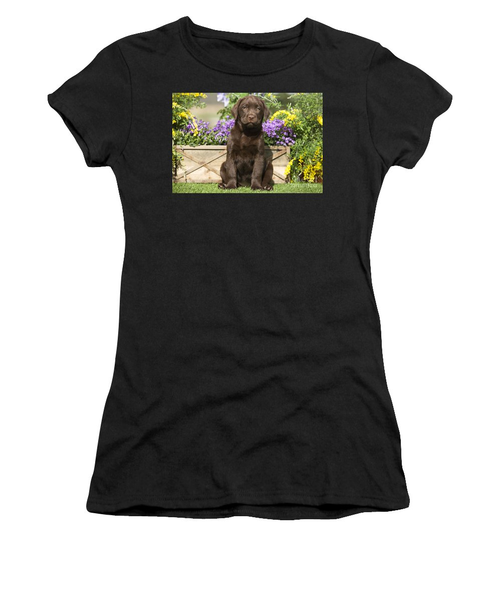 Labrador Retriever Women's T-Shirt (Athletic Fit) featuring the photograph Chocolate Labrador Puppy by Jean-Michel Labat
