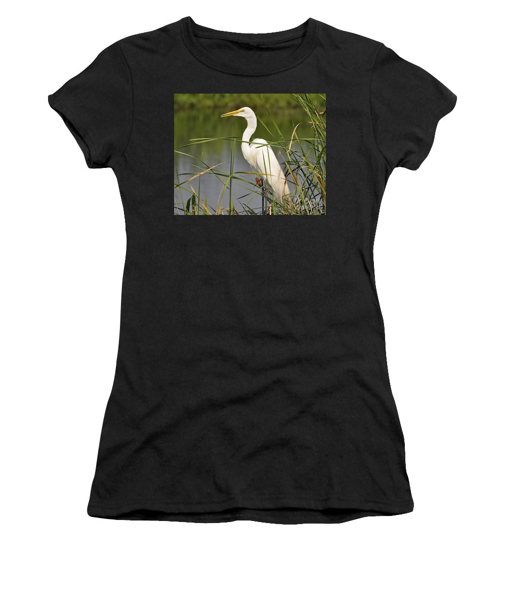 Egret Women's T-Shirt (Athletic Fit) featuring the photograph Egret In The Cattails by Al Powell Photography USA