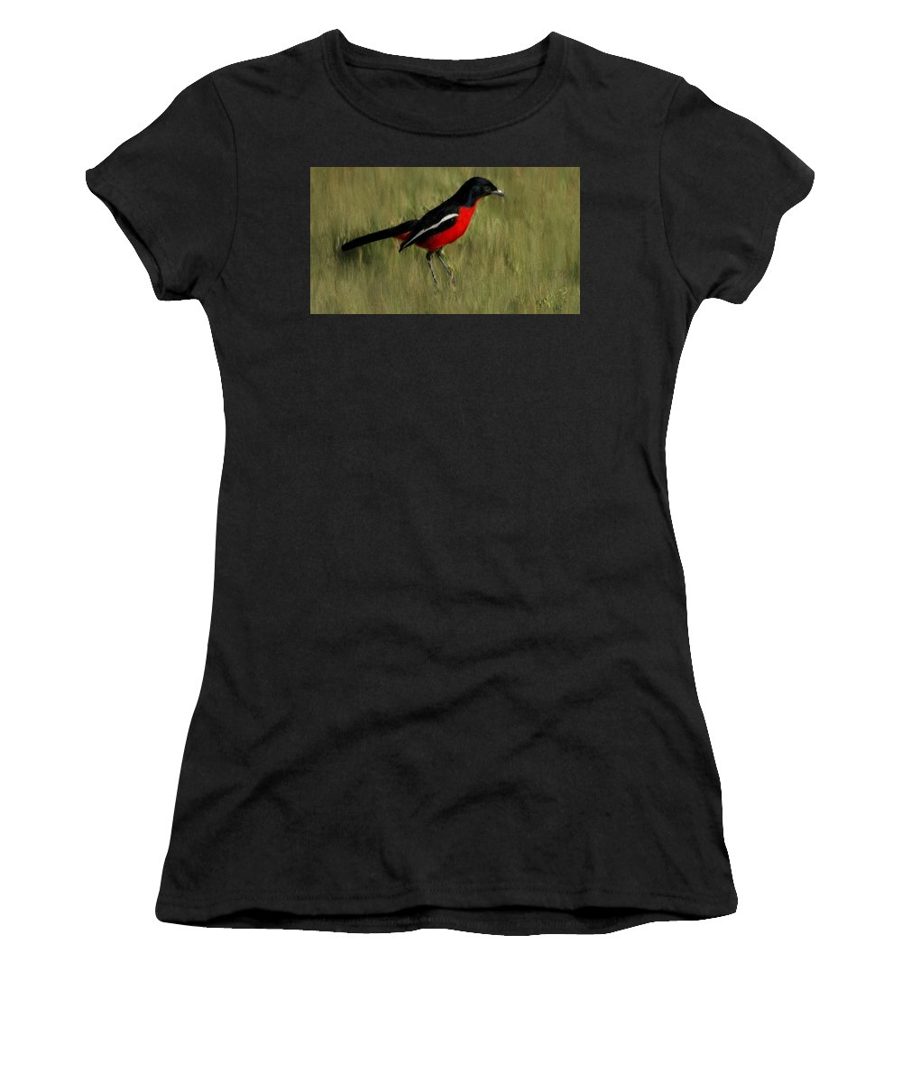 Bird Women's T-Shirt (Athletic Fit) featuring the painting Laniarius Atrococcineus by Bruce Nutting