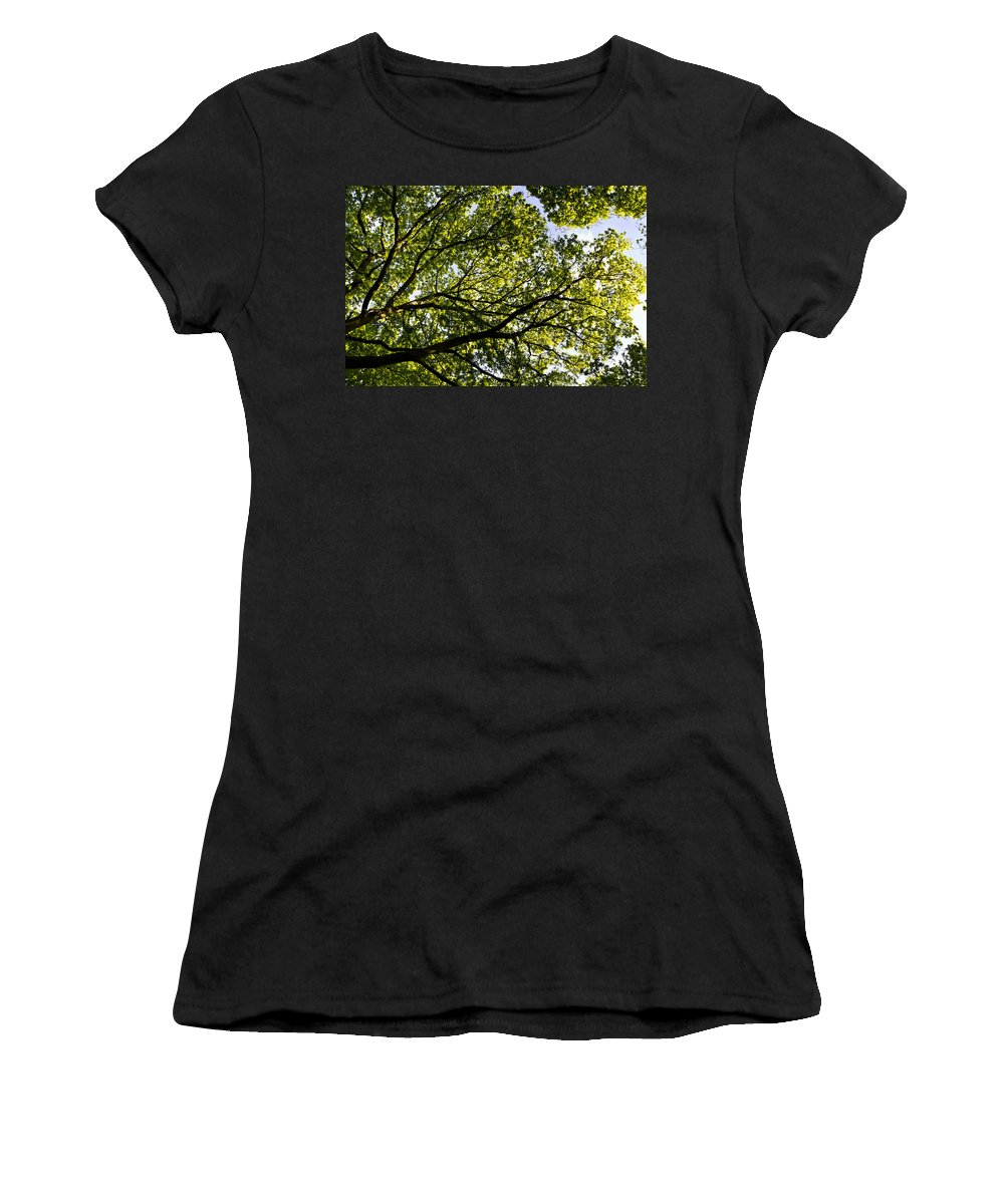 Tree Women's T-Shirt featuring the photograph The Forest by David Pyatt