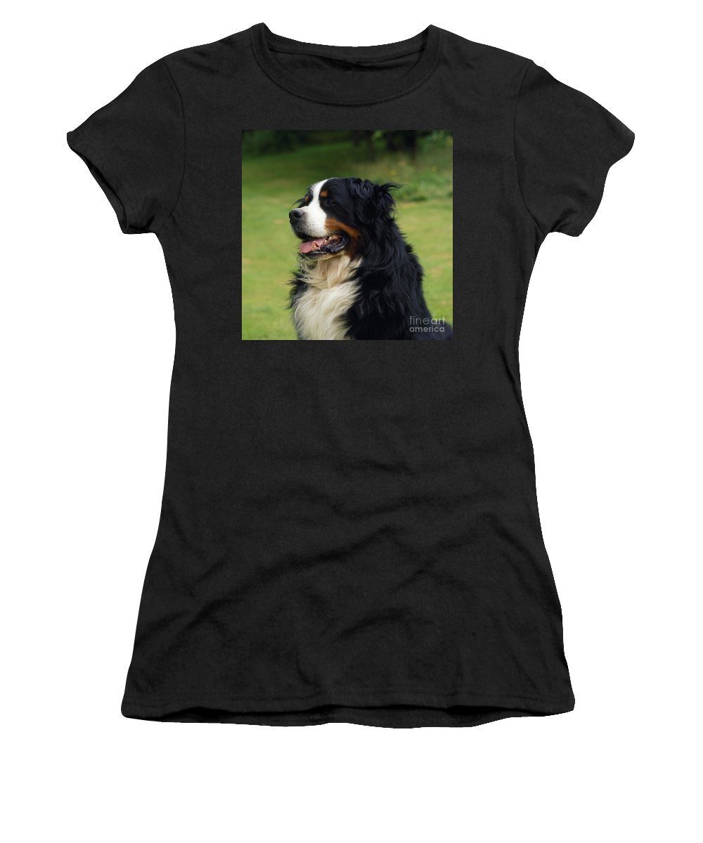 Bernese Mountain Dog Women's T-Shirt (Athletic Fit) featuring the photograph Bernese Mountain Dog by John Daniels