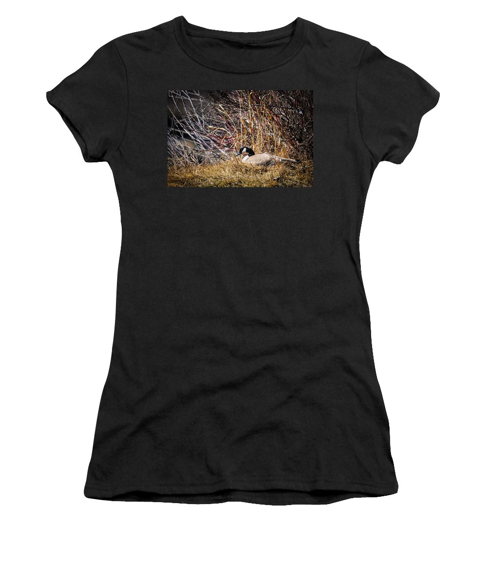 Alberta Women's T-Shirt (Athletic Fit) featuring the photograph Canada Goose by Brandon Smith