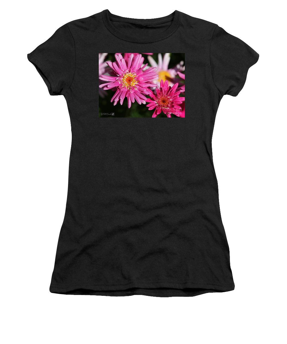 Mccombie Women's T-Shirt (Athletic Fit) featuring the photograph Marguerite Daisy Named Summer Song Rose by J McCombie