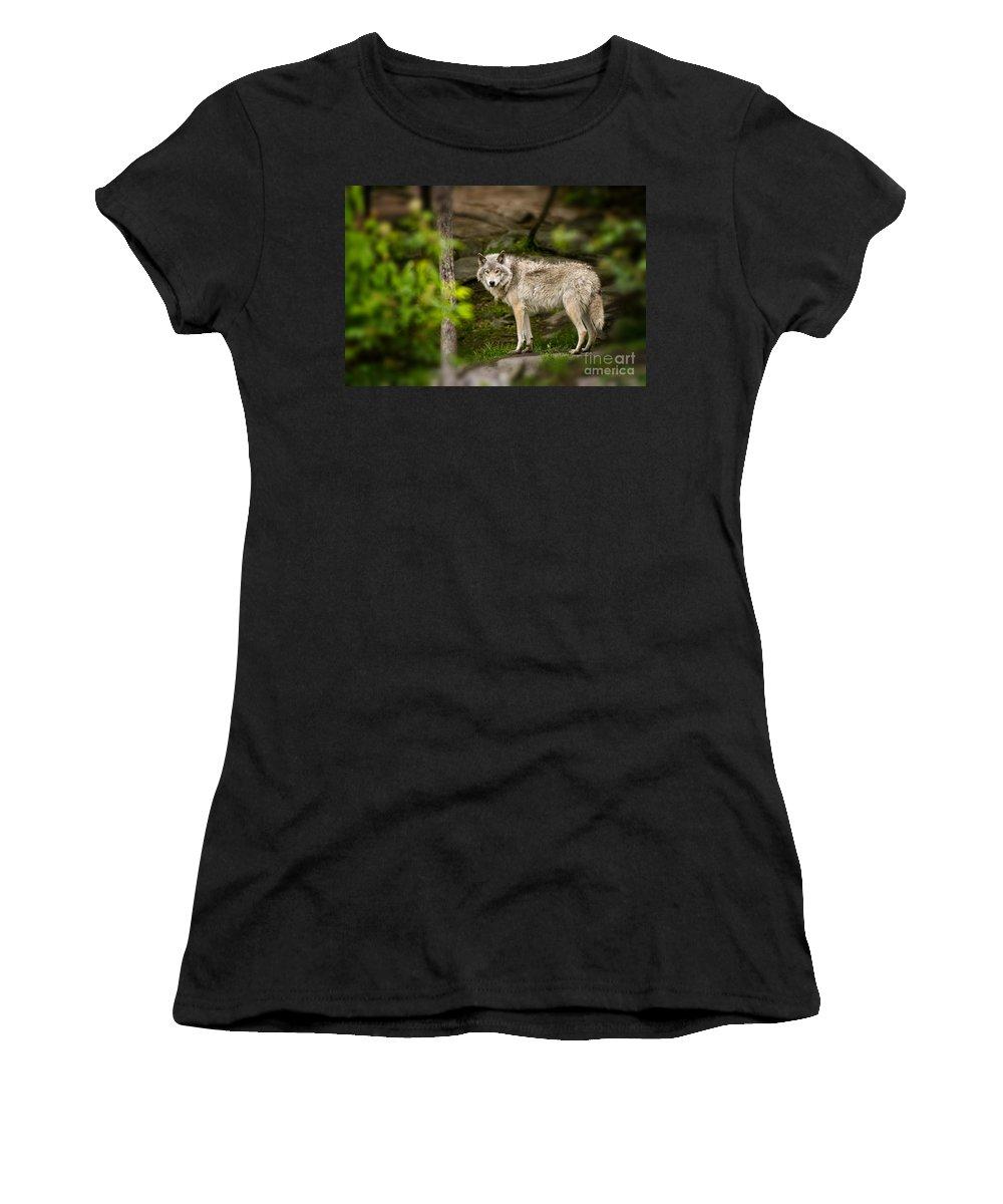 Timber Wolf Photography Women's T-Shirt featuring the photograph Timber Wolf by Wolves Only