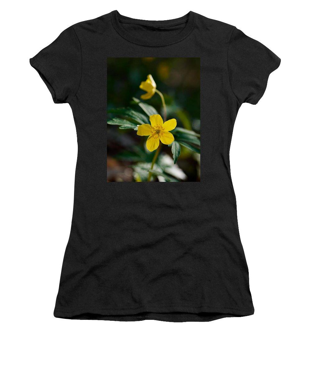 Lehto Women's T-Shirt featuring the photograph Yellow Wood Anemone by Jouko Lehto