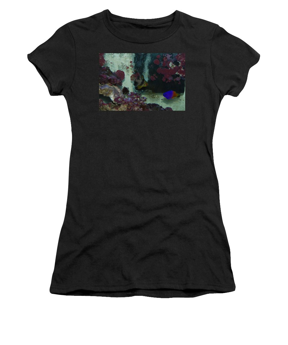 Taken Through Side Of Aquarium Women's T-Shirt (Athletic Fit) featuring the photograph Tropical Fish by Robert Floyd