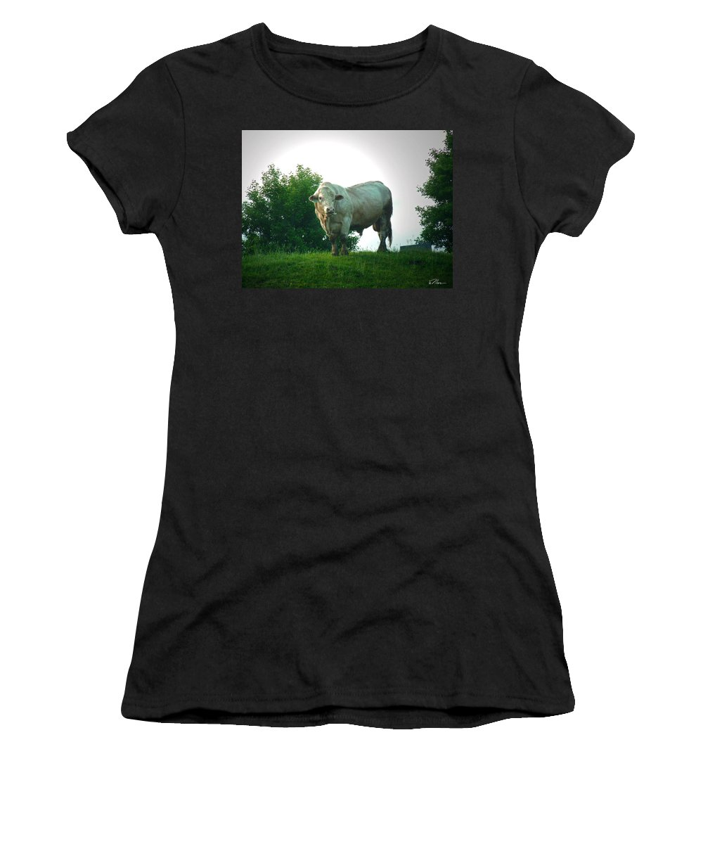 Cows Women's T-Shirt featuring the photograph A Lot Of Bull by Nancy Griswold